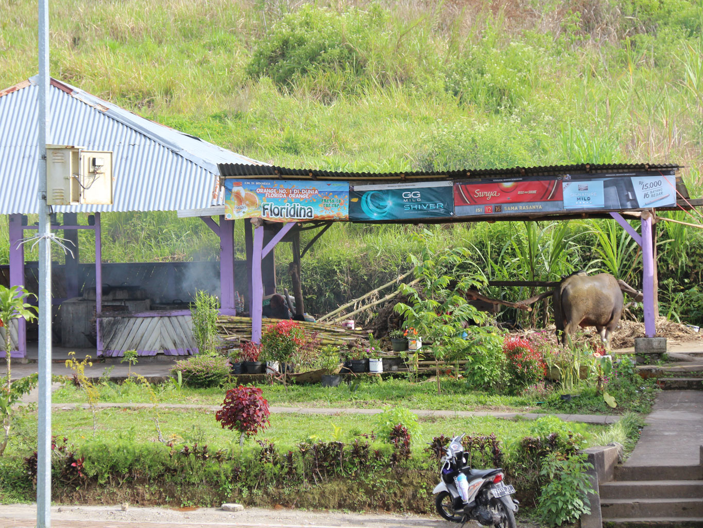 Penggilingan tebu tradisional di Puncak Lawang